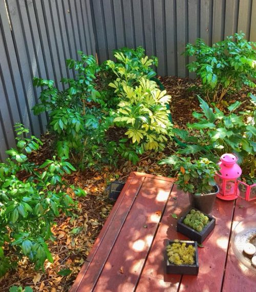 ADACAre-small-garden-1